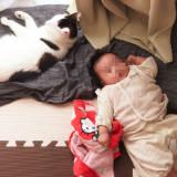 【体験談】猫と赤ちゃんの共同生活。事前対策と気を付けている事