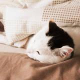 【体験談】猫が3階の高いところから落下して骨折。猫の症状と費用、治療まとめ